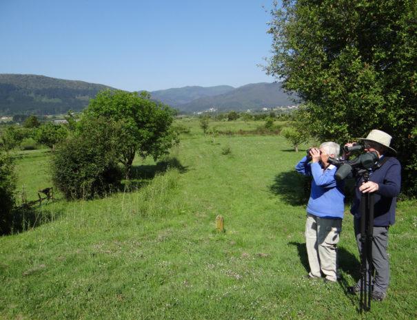 Bird-watching-in-Urdaibai-Wilextours