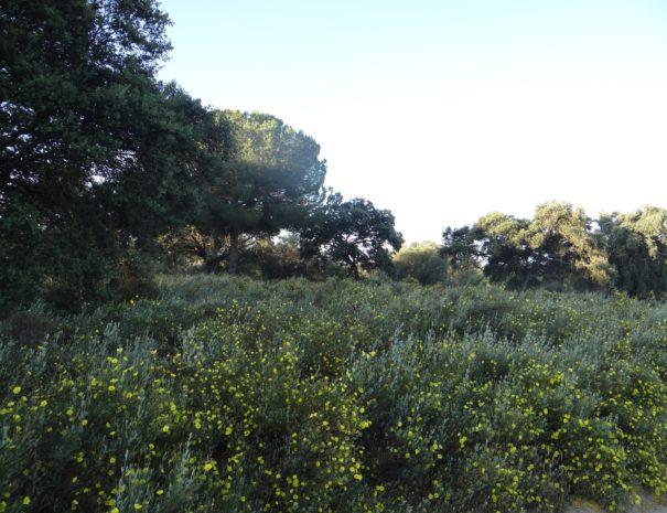 Doñana woodlands Wilextours-min