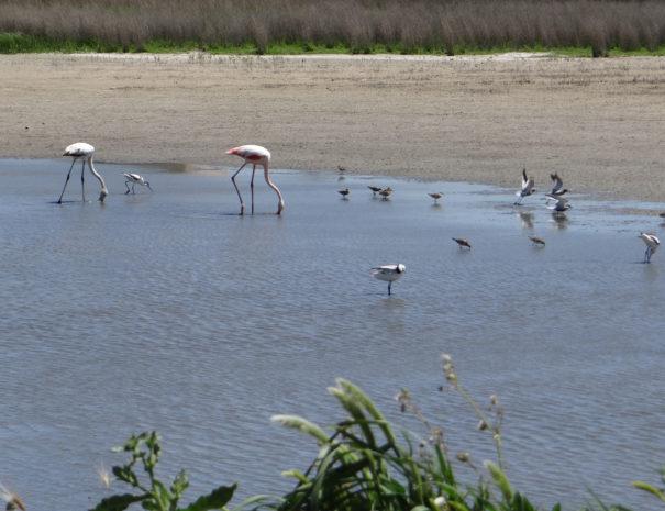 Flock-of-birds-in-pool-Wilextours