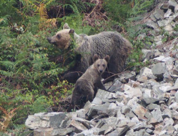 Mum-bear-and-cub-osa-y-cría-Wilextours