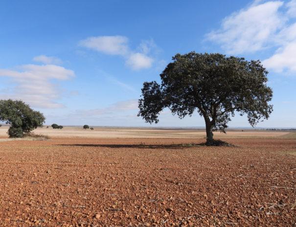 Palencia-plains-lookout-Wilextours