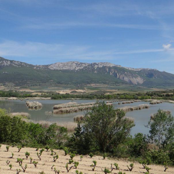 Birding basque Country Sierra Cantabria