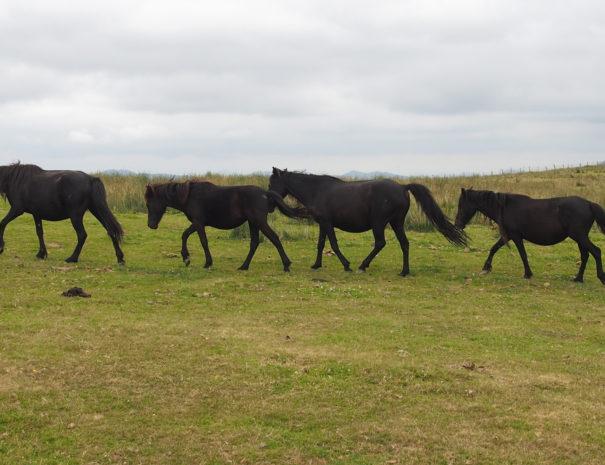 Potoka-horses-Wilextours