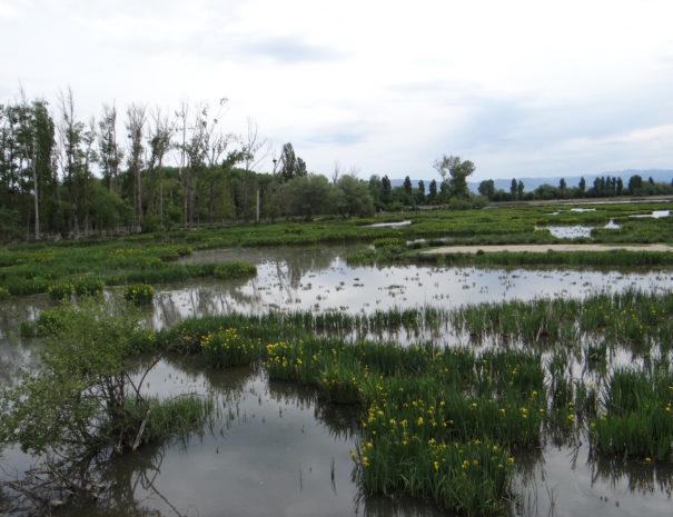 Salburua-wetland-Wilextours