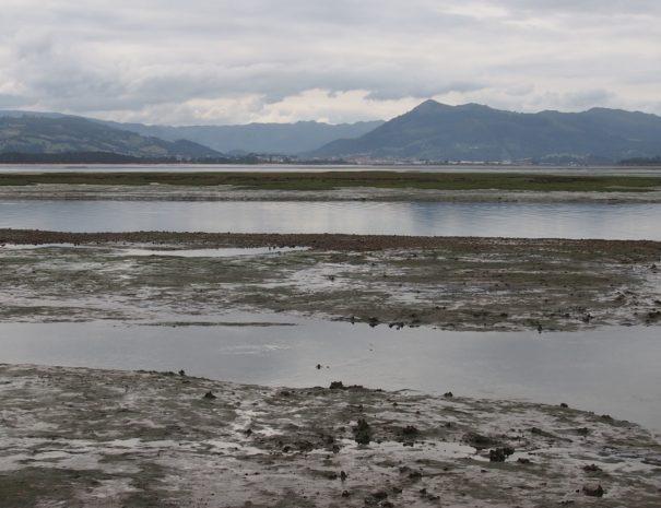 Santoña salt marsh Wilextours