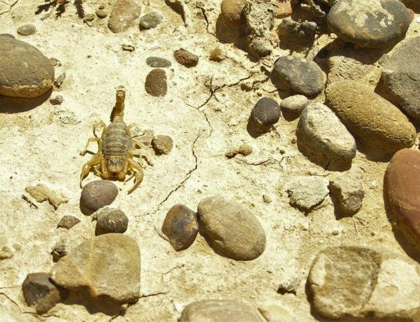 Scorpion-Wilextours