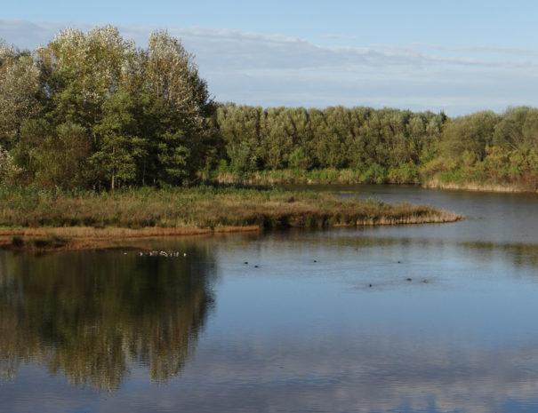 Txingudi-wetlands-Wilextours