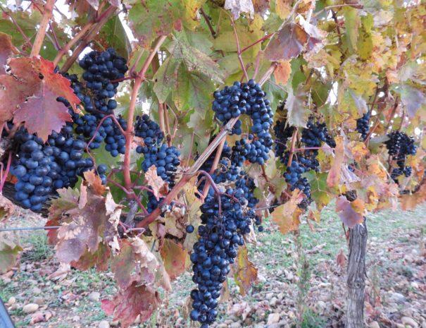 Uvas wineyards Wilextours