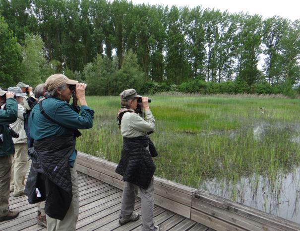 Watching-birds-Salburua-Wilextours