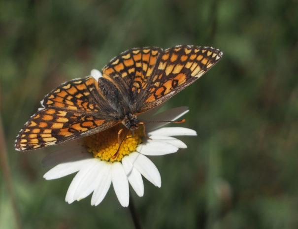 butterfly-sucks-mariposa--Wilextours