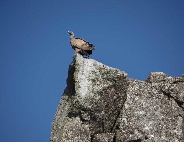 Monfrague bird