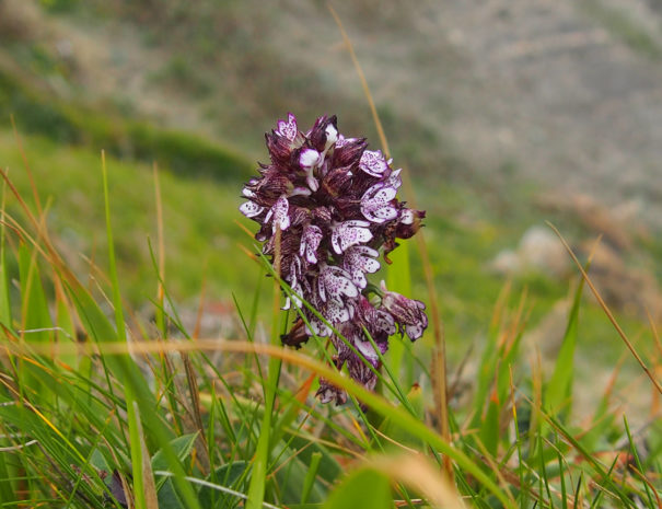orquidea-11-Wilextours